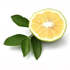 Olio Essenziale di Bergamotto  10 ml