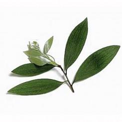 Olio Essenziale di Cajaput   10 ml