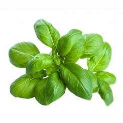 Olio Essenziale di Basilico   10 ml