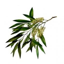 Olio Essenziale di Tea Tree  10 ml