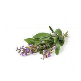 Olio Essenziale di Salvia Officinale 10 ml
